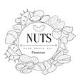 Nuts Collection Vintage Sketch vector image