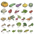 big set different colored ripe vegetables vector image