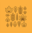 autumn leaves line icons set vector image