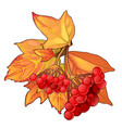 autumn maple leaves and sprig of red berries vector image