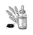 lavander essential oil bottle and bunch of flowers vector image
