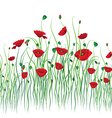 poppy back vector image
