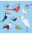 Bird set cartoon colorful  eps vector image