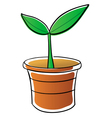 potted plant vector image vector image