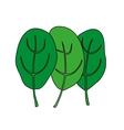 Cartoon of green fresh spinach vector image