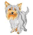 yorkshire terrier sketch vector image