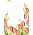 red tulip flowers spring season invitation vector image