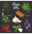 Spices and herbs set Colored on dark vector image