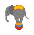 elephant on the ball in circus vector image