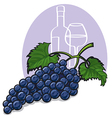 blue grapes vector image