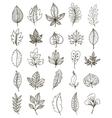 Hand Drawn Foliage Monochrome Set vector image