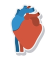 heart organ human isolated icon vector image