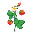 with a wild strawberry vector image