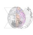 cerebral hemisphere vector image
