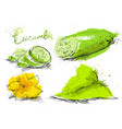 cucumber slices isolated on white background art vector image