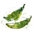 Watercolor of peas vector image