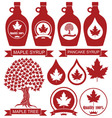 Maple Syrup vector image