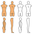 Male mannequin outlined torso vector image vector image