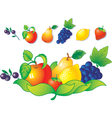 Fruit and berry vector image vector image
