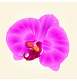 purple orchid beautiful flower closeup isolated vector image