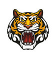 tiger animal muzzle sport team mascot icon vector image