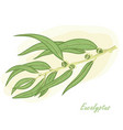 eucalyptus branch hand drawn vector image