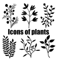 Icons of plants Herbarium Grass Plants vector image