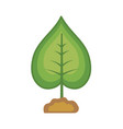 nice plant with ground to natural ecology vector image