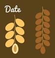 dates fruit vector image