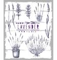 lavender set vector image