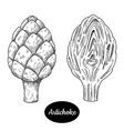 hand drawn sketch style artichoke vector image