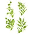 flower green elements vector image