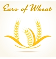 Wheat ears or rice icon vector image