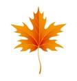 Autumn maple leaves isolated on white vector image