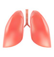 human lungs and trachea anatomy isolated on a vector image