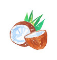 two halves of coconut with green palm tree leaves vector image