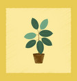 flat shading style plant ficus vector image