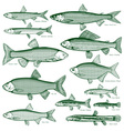 Fish freshwater vector image