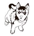 dog breed breed husky vector image