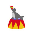 seal in circus vector image