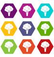 broccoli icon set color hexahedron vector image