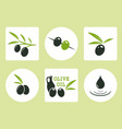 black and green olives with oil olive vector image