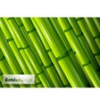 green bamboo background vector image