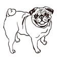 dog breed pug vector image