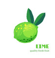 fresh lime isolated on white background vector image