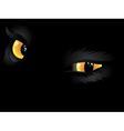 Yellow cat eyes in the dark vector image