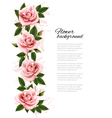 Flower background with beauty pink roses vector image vector image