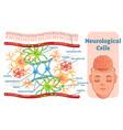 neurological cells diagram vector image