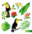 tropical flowers leaves and birds vector image vector image