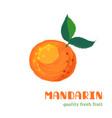 fresh mandarin isolated on white background vector image